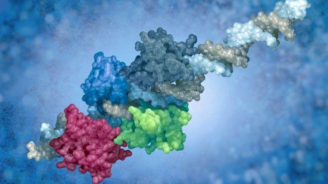El estudio revela como pequeños ajustes en la forma y composición de las proteínas han ayudado a los humanos y otros mamíferos a responder a los virus.