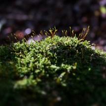Miniaturwald auf Baumwurzel