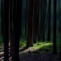 Neulich(t)-im-Wald