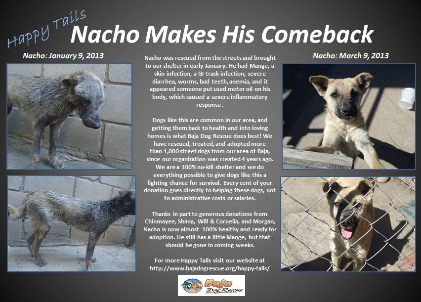 Nacho - Happy Tails