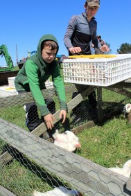 Anyone Can Farm - Chicken Tractors