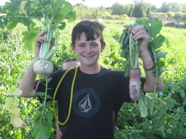 garden vegetables: Homesteader's Guild