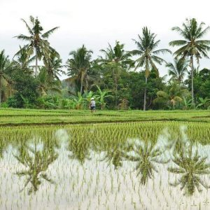 Indonesian rice fields by Baki Clothing Company