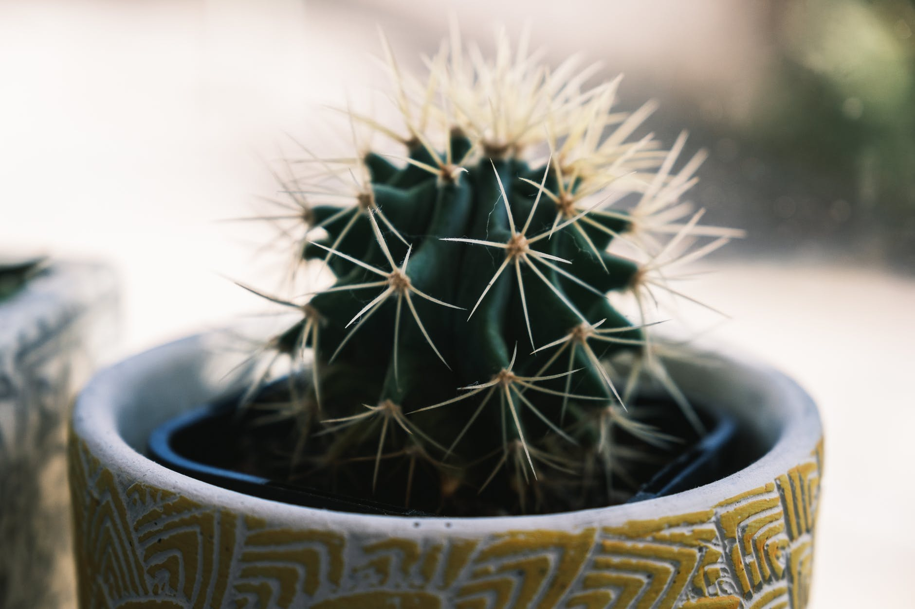 potted cactus in light room