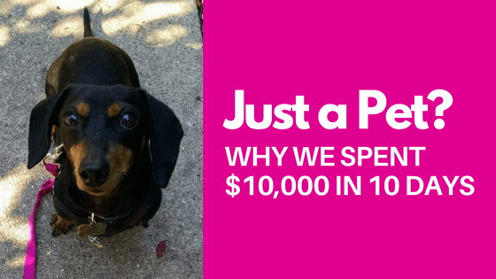 Just a Pet? Why We Spent $10,000 In 10 Days
