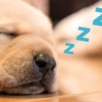 瞑想で快眠