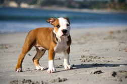 puppy-345334_640