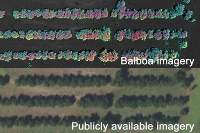 Precision Agriculture Mapping Micronutrient Variance Pecans
