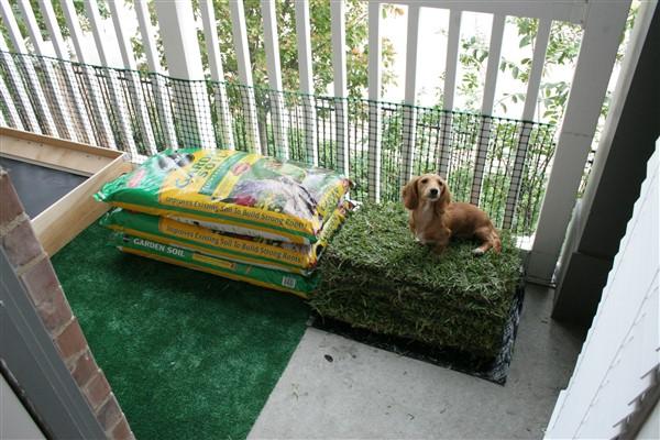 balcony dog potty ideas indoor toilet