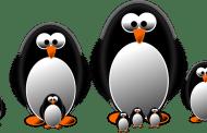 Google bestätigt Penguin 4.0