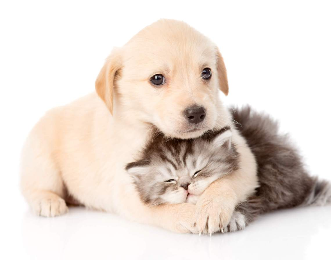 puppy-kitten1920
