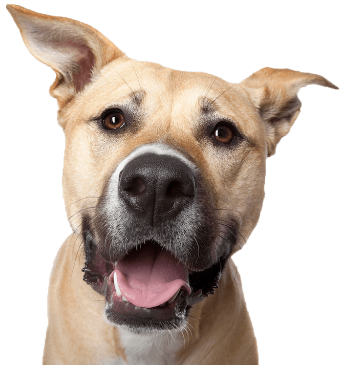 dog-smile600png