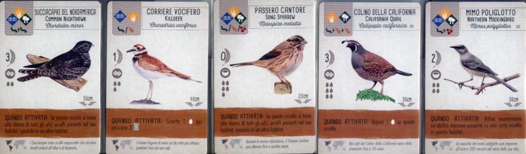 Uccelli che possono vivere al suolo