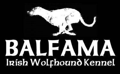 Irish Wolfhound Kennel Balfama
