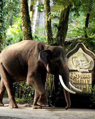 balade-a-dos-d-elephant au parc de taro bali