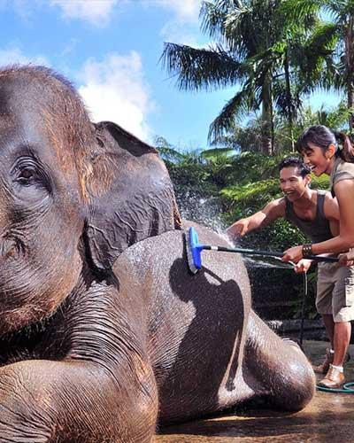 laver doucher le gros elephant de bali