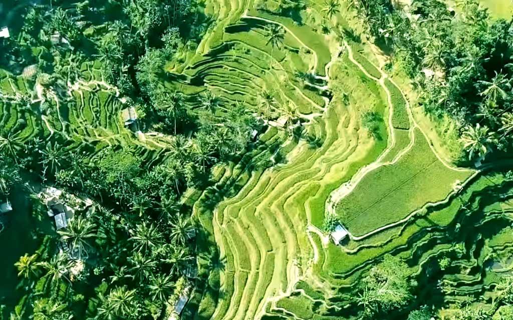 decouvrir les rizieres de bali