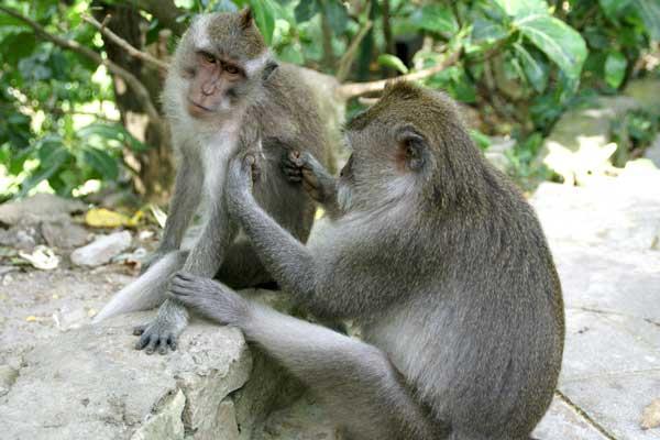 foret-des-singes-ubud