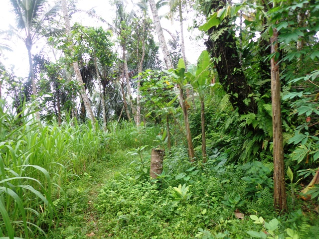Land for sale in Ubud Bali - LUB170