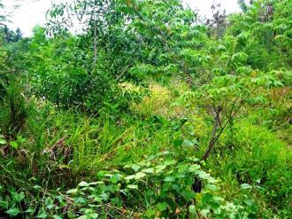 Land for sale in Canggu Bali - LCG077