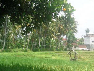Land for sale in Canggu Bali - LCG079