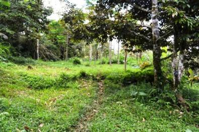 Land for sale in tabanan LTB011