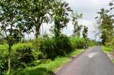 Land for sale in jatiluwih tabanan bali LTB012