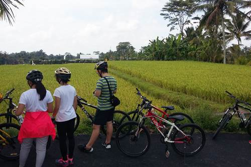 Bali Ubud Eco Cycling Tour - Link to Page Image - 160217