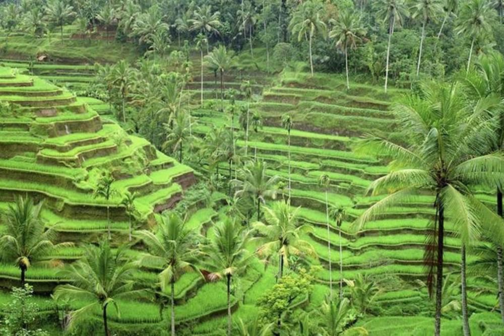 Bali Kintamani and Ubud Full Day Tour - Gallery - 05280217