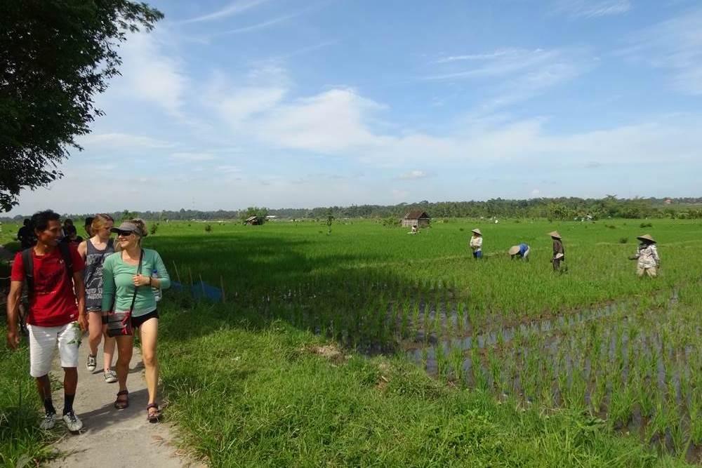 Bali Ubud Rice Paddy Trekking - Gallery 02200217R1