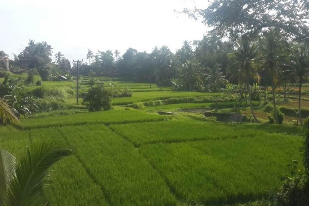 Bali Ubud Rice Paddy Trekking - Gallery 03200217
