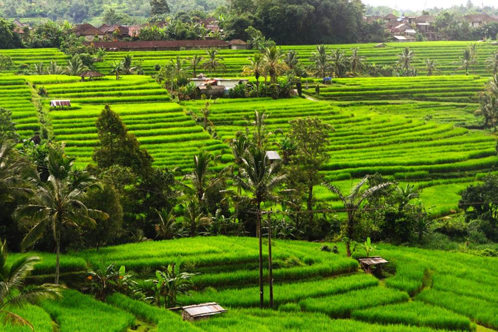 Bali Bedugul and Tanah Lot Full Day Tour - Gallery 05030317