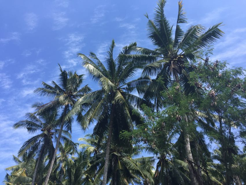 Bali meteo Ubud