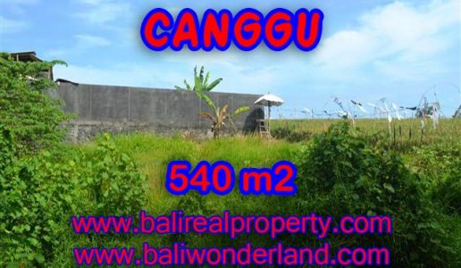 Land for sale in Canggu, Magnificent view in Canggu Bali – TJCG131