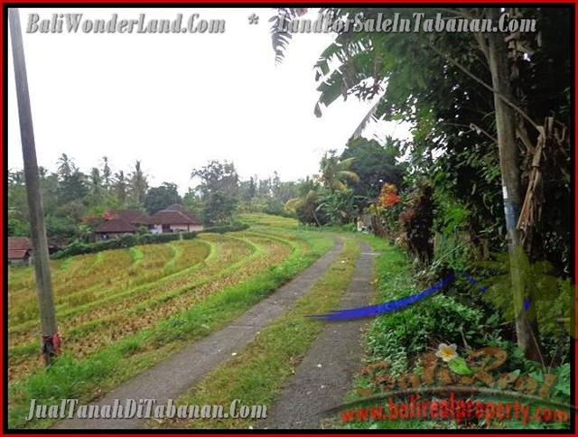 Extraordinary Land for sale in Tabanan Bali, Rice fields view in Tabanan selemadeg– TJTB140