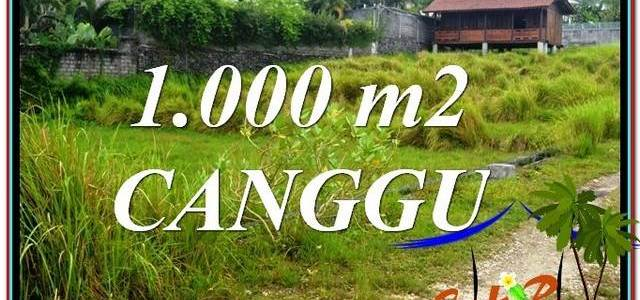 Beautiful PROPERTY LAND SALE IN Canggu Pererenan BALI TJCG214