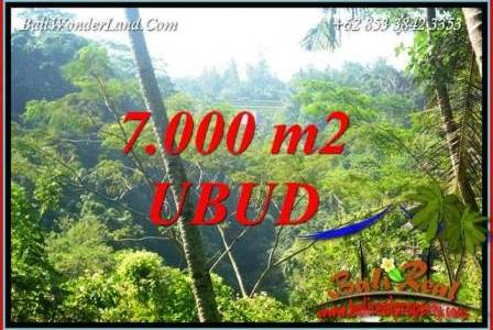 Affordable Property Ubud Tegalalang 7,000 m2 Land for sale TJUB714