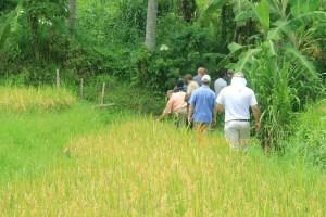 PEFC Jatiluwih Short Rice Paddy Trekking