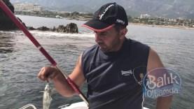Sokan (Sokar) Balığı Avı