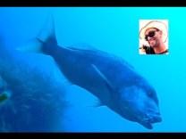 Sırtı çekerken gelen sinarit balığı