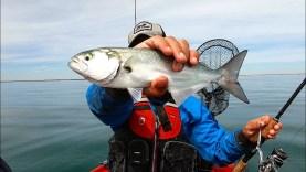 Zoka ile balık avı