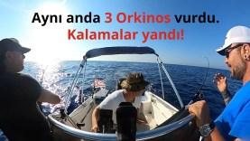 Aynı anda 3 albacore orkinos, kalamalar yandı!