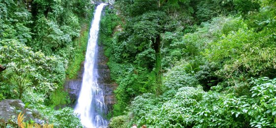 Gitgit Waterfall – Singaraja Bali Places of Interest