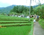 gitgit, singaraja, bali, waterfalls, gitgit waterfall, singaraja bali, places, places of interest, bali places of interest, rice paddy