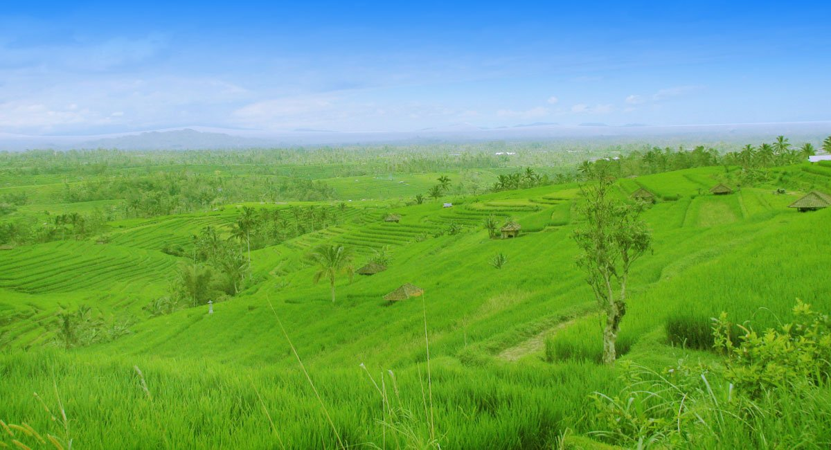 Jatiluwih Rice Terrace - Bali UNESCO World Heritages