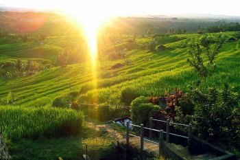 bridge, jatiluwih, bali, unesco, world, heritages, sites, rice, paddy, terrace, rice terrace, jatiluwih rice terrace, unesco world heritages