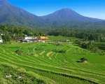 panoramic view, jatiluwih, bali, unesco, world, heritages, sites, rice, paddy, terrace, rice terrace, jatiluwih rice terrace, unesco world heritages