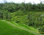 panorama, tegalalang, rice, terrace, ubud, bali, places, interest, tegalalang rice terrace, places of interest, bali places of interest, ubud tour, bali sightseeing, tourist activities