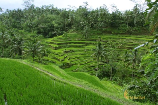 panorama, tegalalang, rice, terrace, ubud, bali, places, interest, tegalalang rice terrace, places of interest, bali places of interest