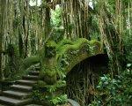 ubud, monkey forest, interest, place of interest, bali, gianyar, rain forest